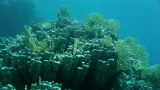 Rafy koralowe Morza Czerwonego – Egipt